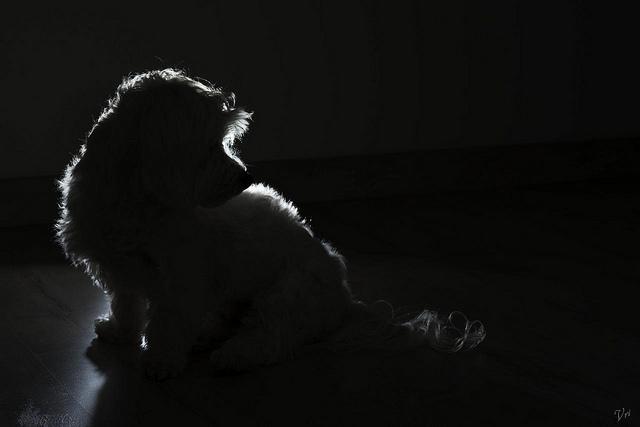 Kiro´s silhouette