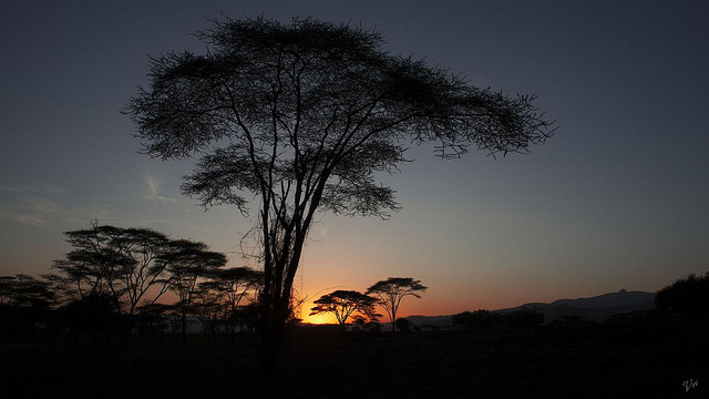 Essence of Africa