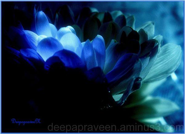 Flowerphoto,India,Deepa,Deepaphotograph,Macro