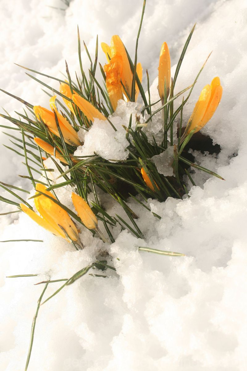 Flower,macro,flowerphotography,yellow,daffodils