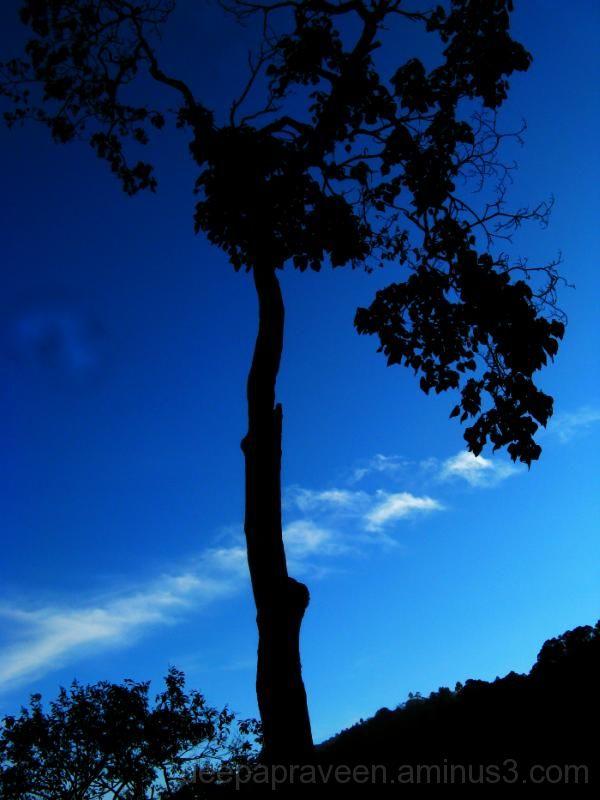 Tree,cloud,deepa,deepapraveen,deepamadhu,deepaphot