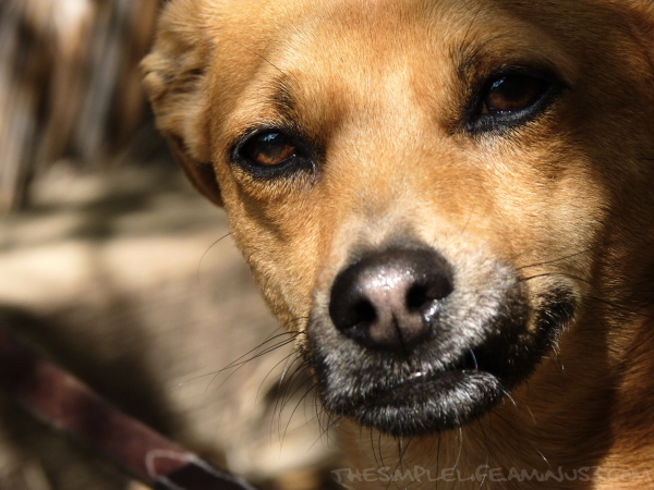 Puppy Shade