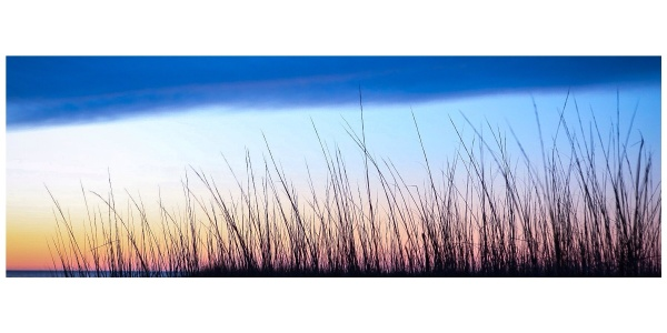 ocracoke seagrass