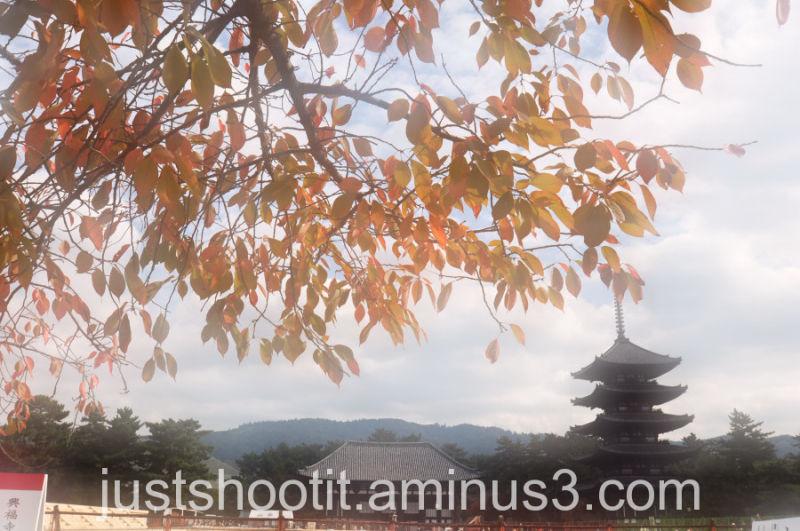Dreamy Nara