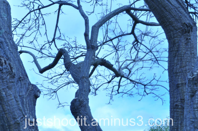 Tree branches1