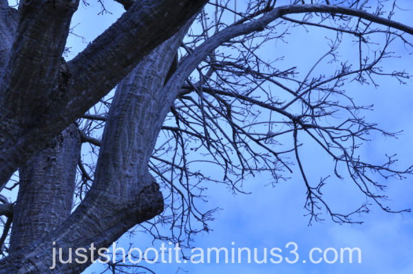 Tree branches2