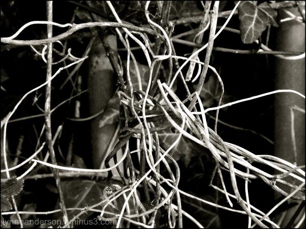 Twisted Twigs