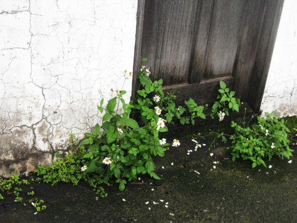 Overgrown Doorway