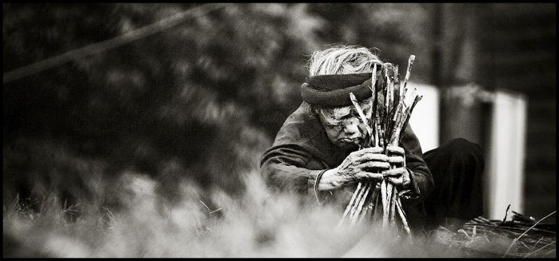 old vietnamese woman gathering firewood