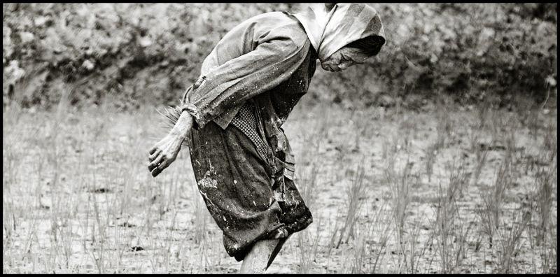 vietnamese woman in rice field