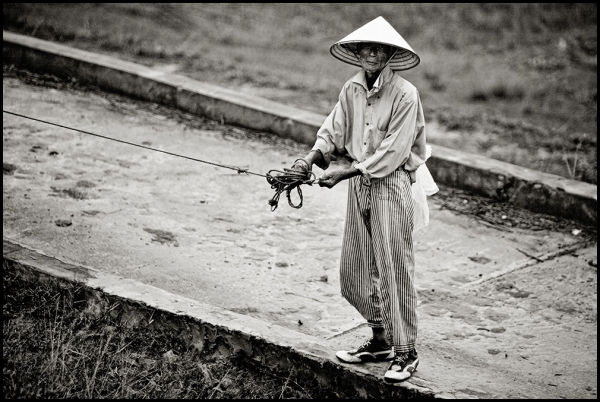 portrait of a vietnamese man walking his cow