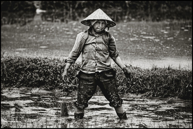 portrait of an vietnamese woman