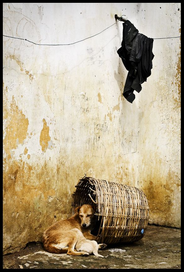 dogs in srilanka
