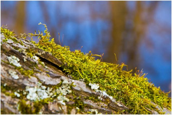 moss wintercolours