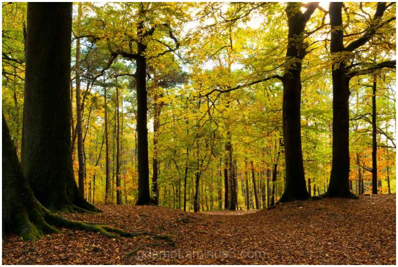The top of the Bolderberg in the autumn of 2011