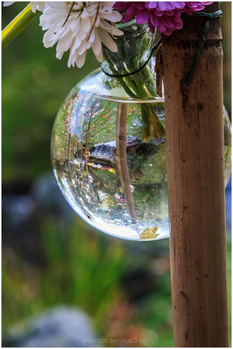 reflection of the garden in a bottle