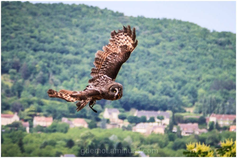 Flight of the Owl