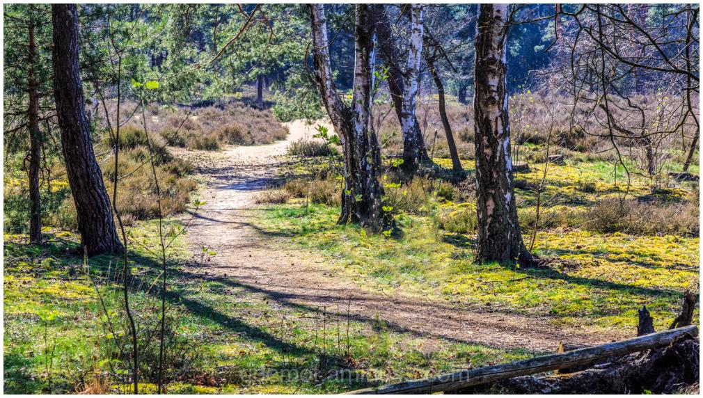 heather landscape