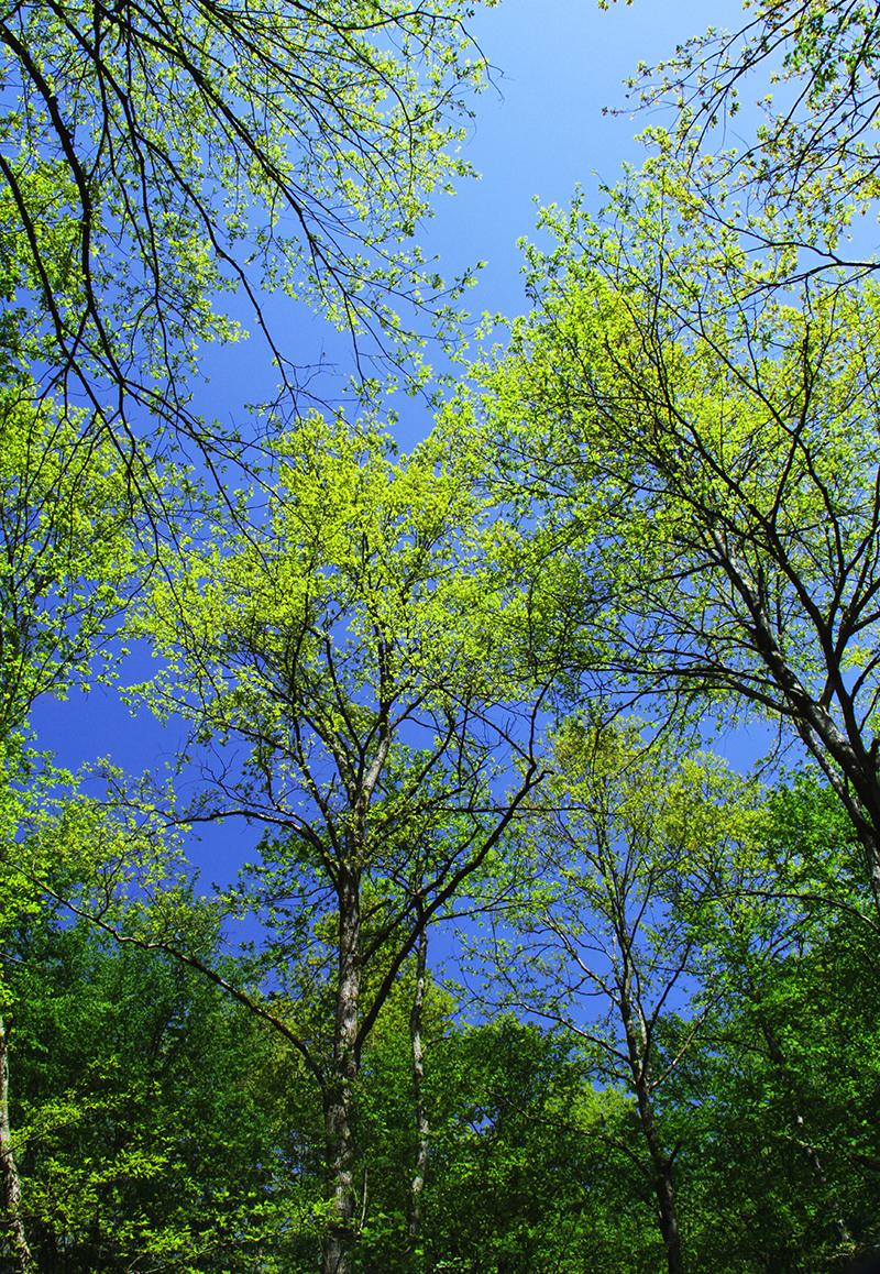 رنگهای بهاری