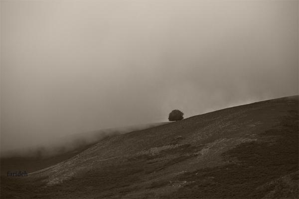 که هستم من آن تک درختی، که در پای طوفان نشسته