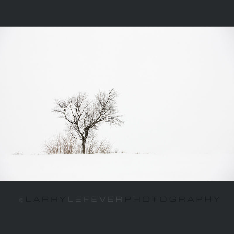 Solitary tree in snow.