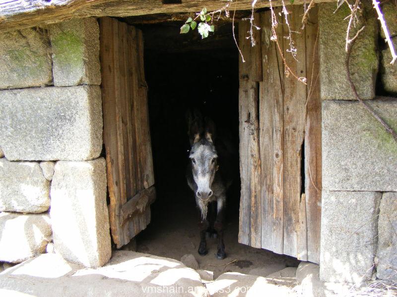 ane donkey buro