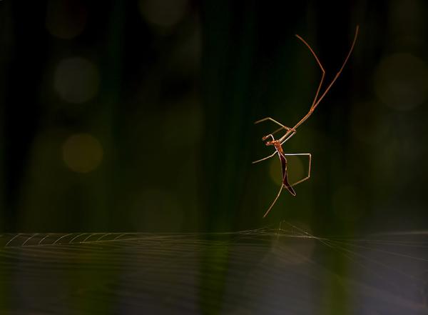 Spider, web, trampoline