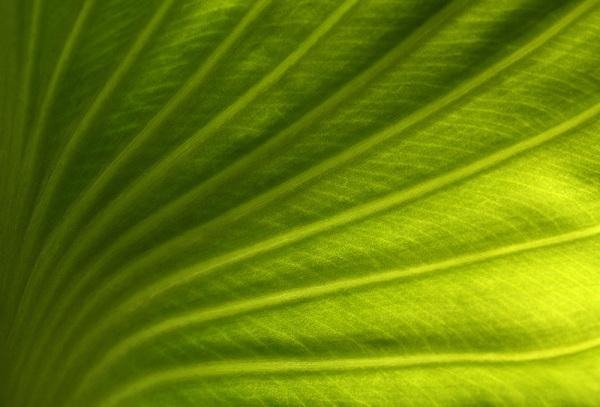 leaf, lighting