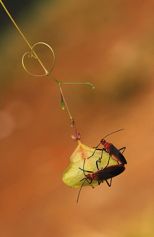 Love, macrophotography
