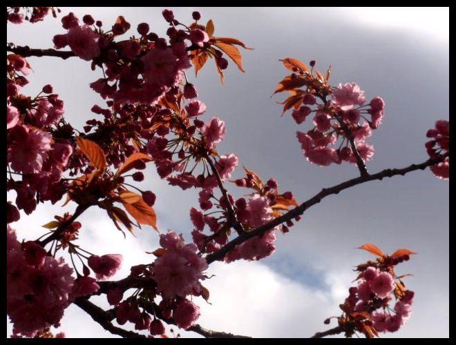 Primavera escocesa
