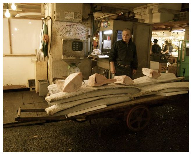 Tsukiji Fish Market - Man, Tuna Cart