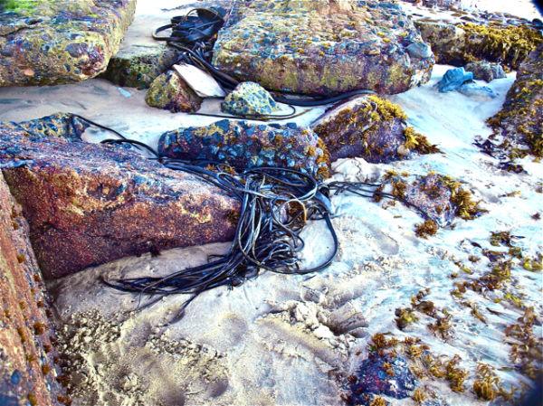 Barnacles,  Viña del Mar