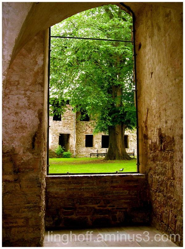 stone green borgholms slottsruin träd murar fönste