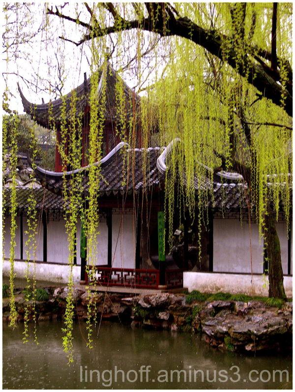 weeping willow china kina vår spring