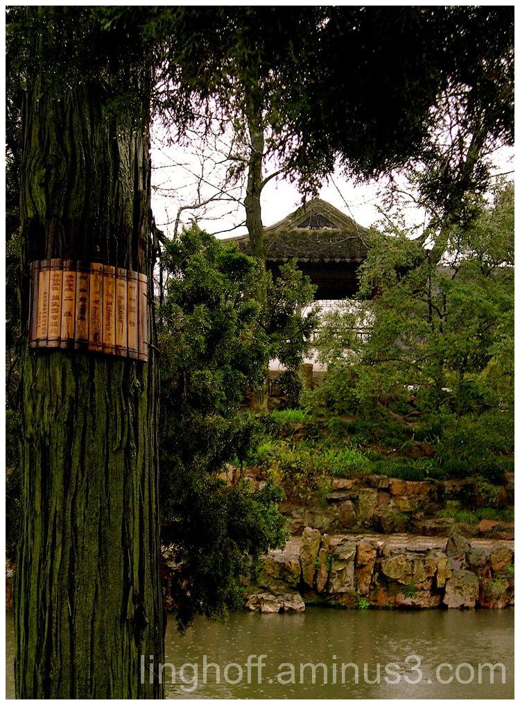 another rainy day tree pine china kina