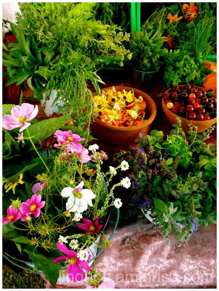 berlin splendor höstblommor flowers colours höst