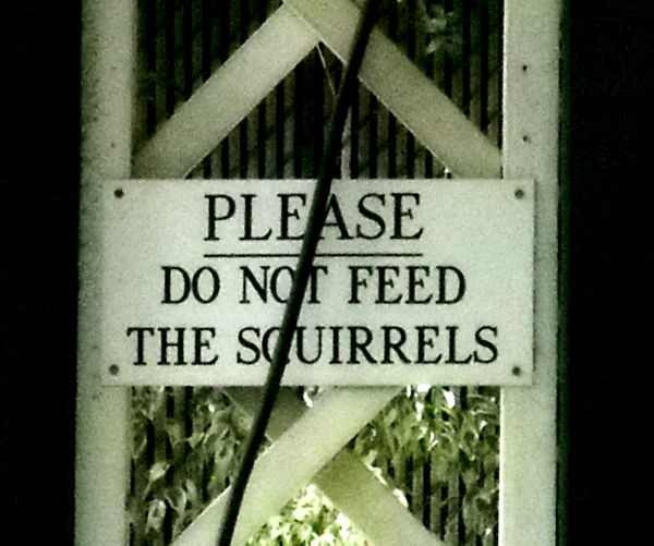 Please Do Not Feed the Squirrels