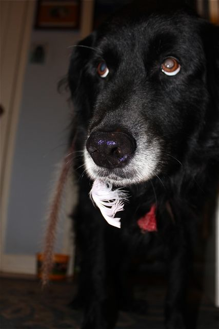 black dog with white feather on her mouth
