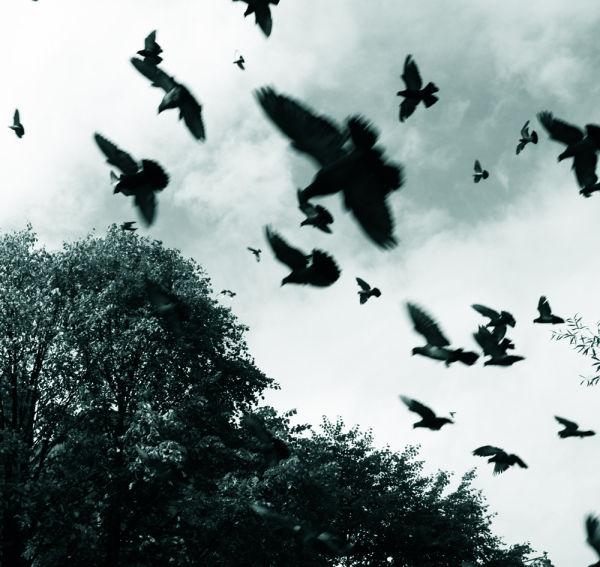 Glasgow sky - pigeons fly