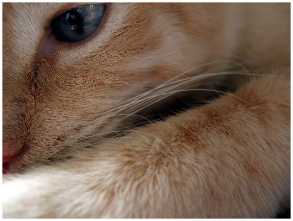 up close shot a of kitten