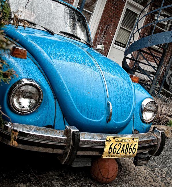 Beetle cherche ami