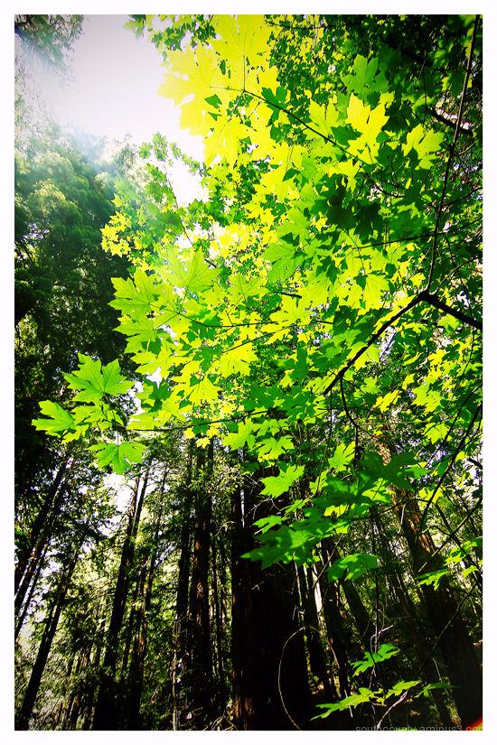 Backlit Green