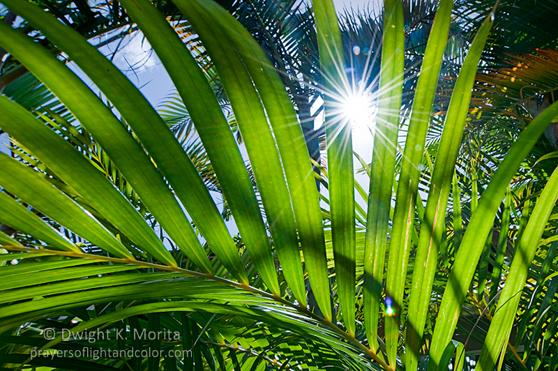 The Hawaiian sun bursts through palm fronds