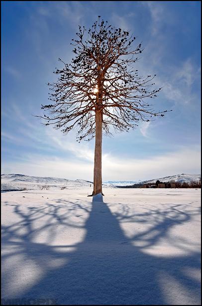 Alone tree !