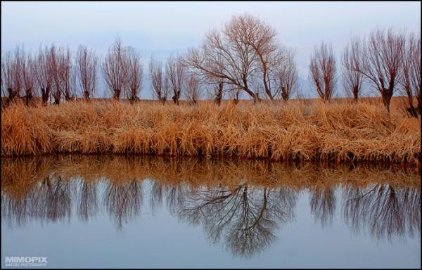 Reflection ...