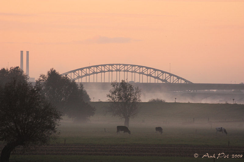 Misty riverbank