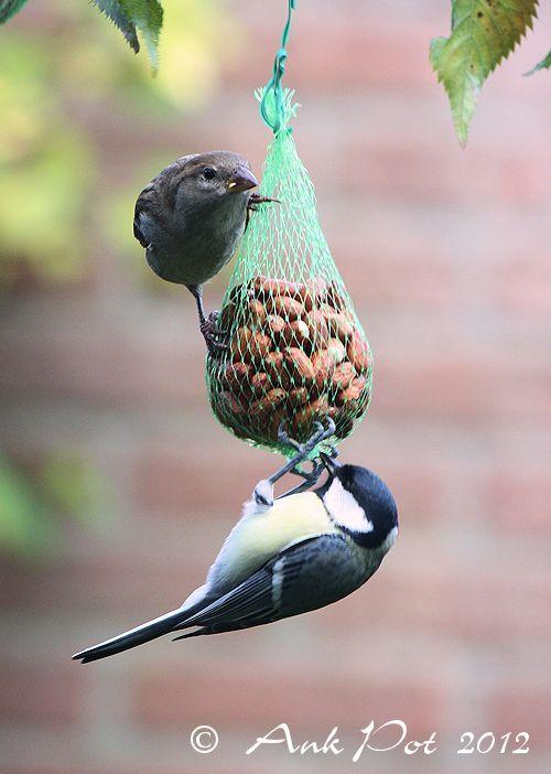 birds eating together