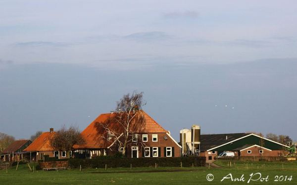 Dutch farm