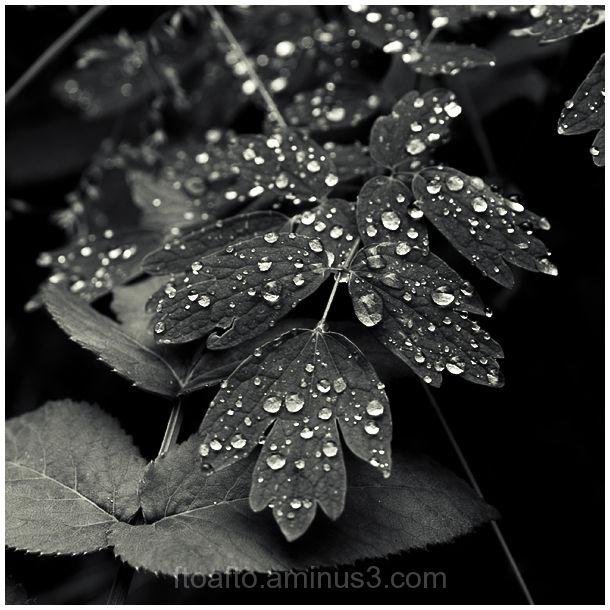Plants B/W Nature