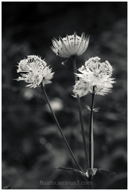 Photos of nature in B / W
